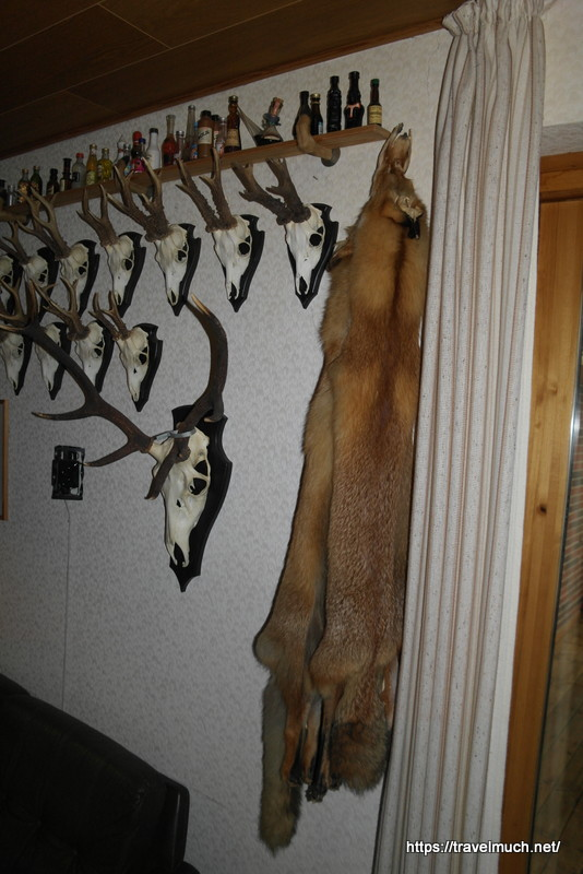He's been hunting fox too!